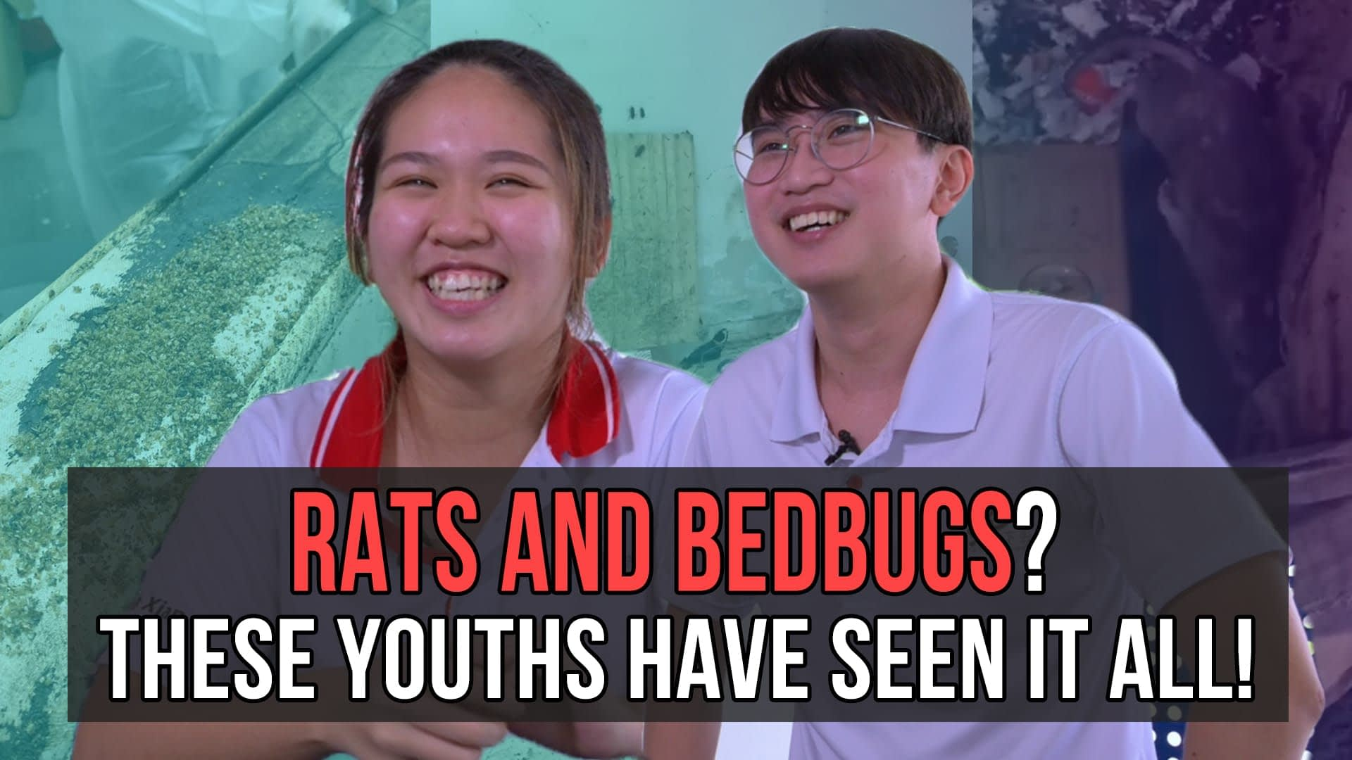 Rats and Bedbugs? These youth volunteers have seen it all!